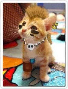 gato_punk